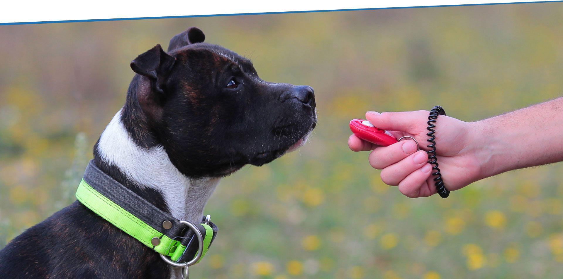 Hund Springt Nicht Mehr
